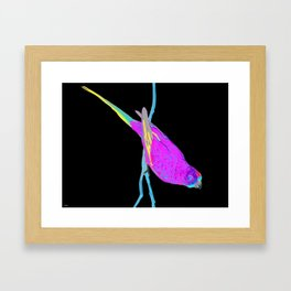 Swift Green Parrot Framed Art Print