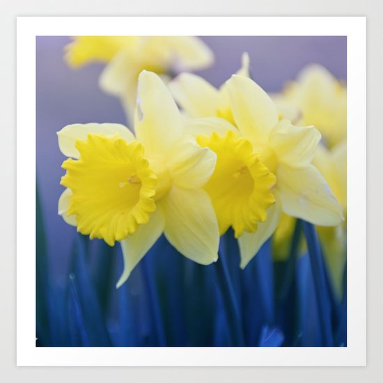 Yellow Narcissus #3 Art Print
