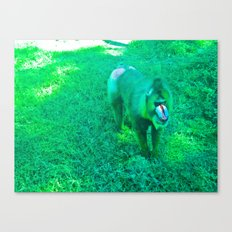 Monkey red nose, between green. Canvas Print