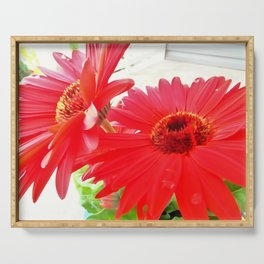 Red Gerbera Daisies WC Serving Tray