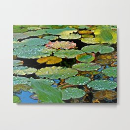Lily Pad After a Storm Metal Print