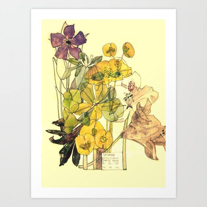 "Charles Rennie Mackintosh ""Flowers & Plants"" (5) Kunstdrucke"