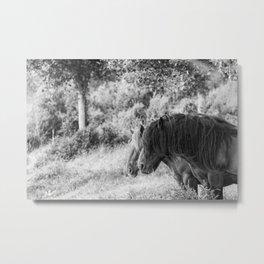 Pair of horses Metal Print