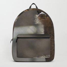 Ostrich sticking up his head Backpack