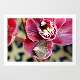 Oddly, Not A Moth Orchid Art Print