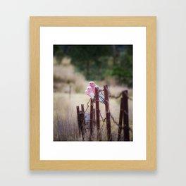 Australian Pink Galahs, Gunnedah, NSW, Australia Framed Art Print