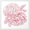 Pink Peony by lauraoconnor