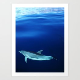 Dolphin, blue and sea Art Print