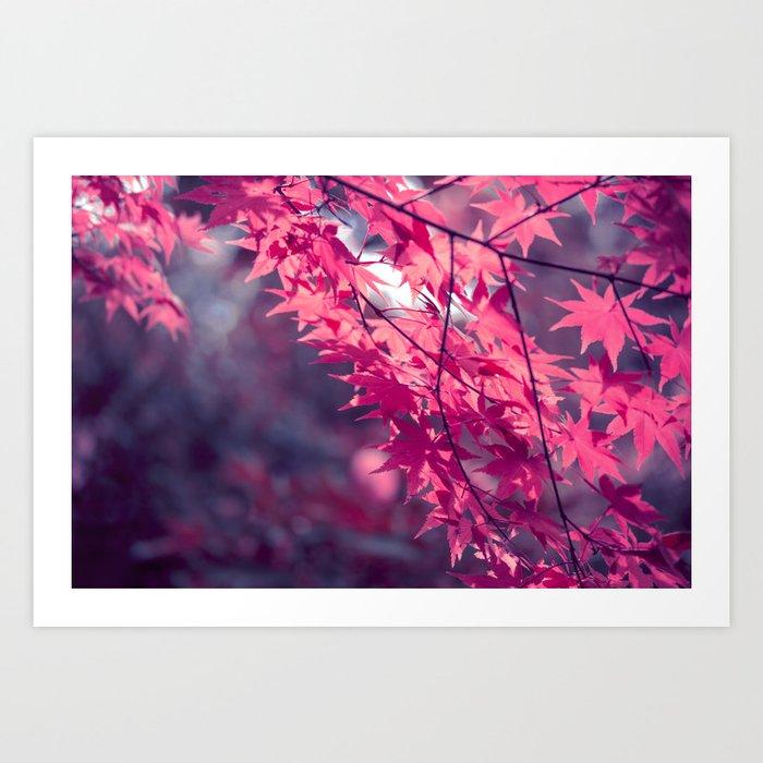 Autumn foliage in backlight Art Print