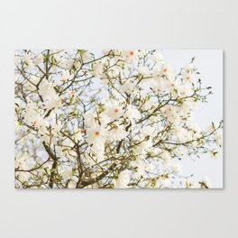 Under the Magolia Tree Canvas Print