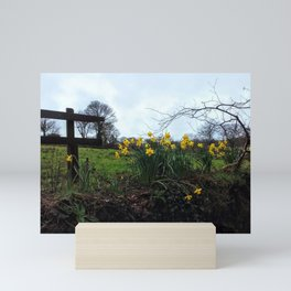 Daffodils in Cornwall Mini Art Print