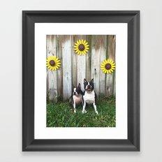 BT Sunshine Framed Art Print