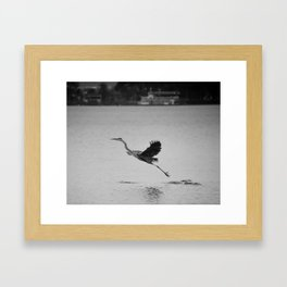 Blue Heron on Canandaigua Lake 2013 Framed Art Print