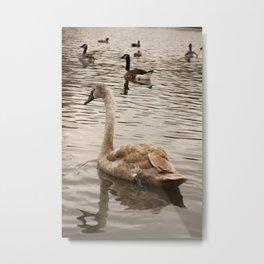 Mortimer the Swan Metal Print