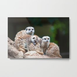 Meerkat Family  (digital painting) Metal Print