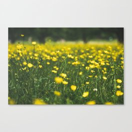 Build Me Up Buttercup Canvas Print