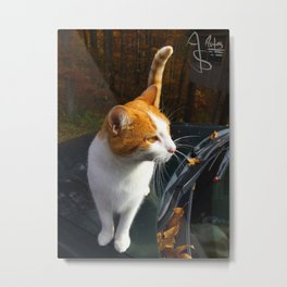Fall Familiar Metal Print