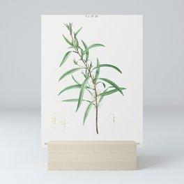 Willow-leaved hakea, Embothrium salicifoliumfrom Traité des Arbres et Arbustes que l'on cultive en F Mini Art Print