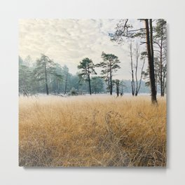 A frosty winter morning in a sand moor with trees Metal Print
