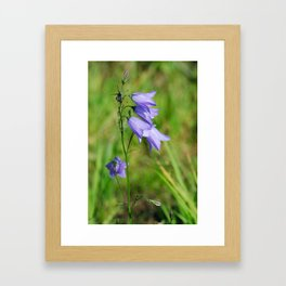 Violet blue Harebell Flower Framed Art Print