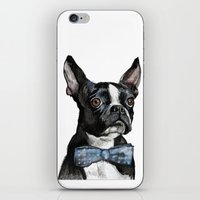boston terrier iPhone & iPod Skins featuring Boston Terrier by Orestis Lazos