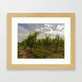Nichol Vineyards, Naramata B.C. Framed Art Print