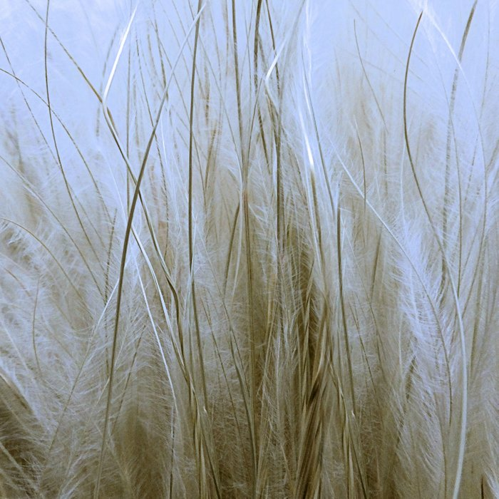 Feather Grass Comforters
