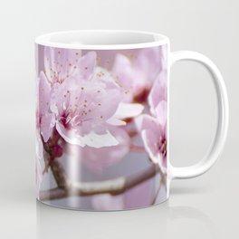 Pink flowers. Blossons. Spring.. Granada. Spain Coffee Mug