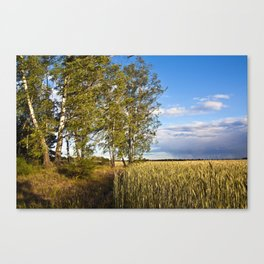 Corn Field with Birch Trees Canvas Print