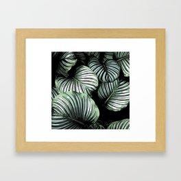 Regnblomst Framed Art Print