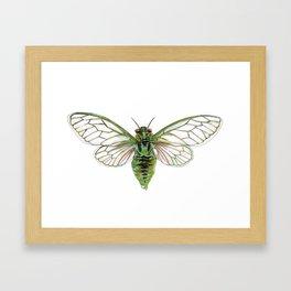 Green Cicada Framed Art Print