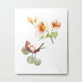 Watercolor Illustration of Buds and flowers of tung oil tree (Vernicia fordii) Metal Print