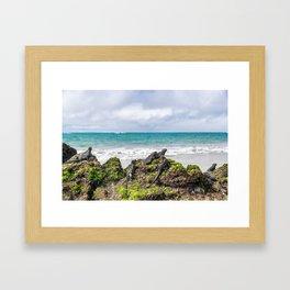 Galapagos Framed Art Print