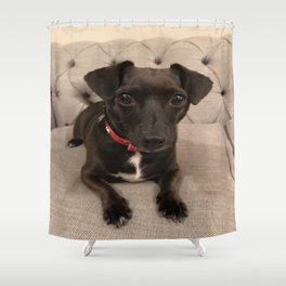 Black Jack Russell / Chihuahua Shower Curtain
