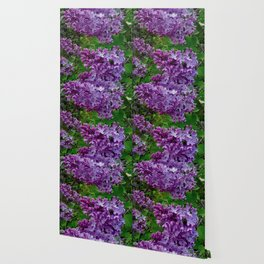 Lilacs in Bloom Wallpaper