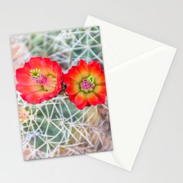Mojave Mound Cactus Flowers Stationery Cards