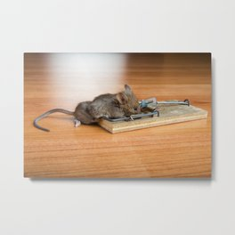 Dead Mouse in Trap Metal Print