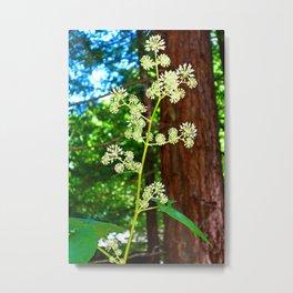 Muir Woods Study 2 Metal Print