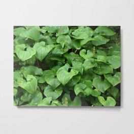 Greens Leaves Metal Print