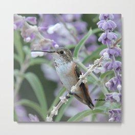 Ms. Hummingbird's Break Time in Mexican Sage Metal Print