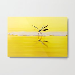 Yellow River .:. Banded Demoiselle at sundown Metal Print