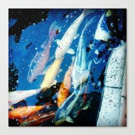 Pond of Koi Canvas Print