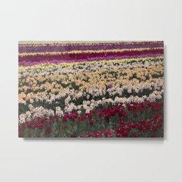 Lompoc Flower Farm Metal Print
