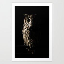 Animal Photography - The Owl Art Print