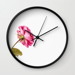 Rose on white background Wall Clock