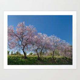 Algarve almond blossom Art Print