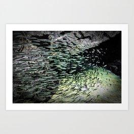 Shimmering Shoal Art Print