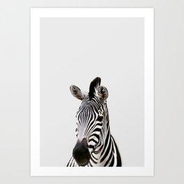 Zebra, African Animal Art Print