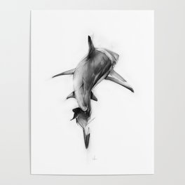 Shark II Poster