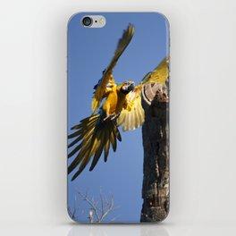Birds from Pantanal Arara Canindé iPhone Skin